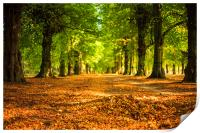 Golden Avenue- Clumber Park -Lime Tree Avenue, Print