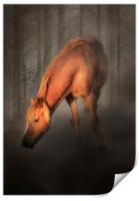 Horse in the mist, Print
