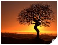 Twisted oak sunset silhouette, Print
