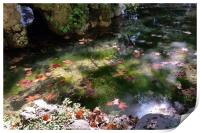 rays and leaves on water, Print