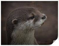 Portrait Of A Young Otter, Print