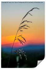Standing Tall At Sunset, Print