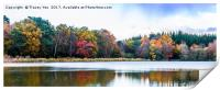 Stover Country Park Lake, Print