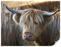 Face to Face With a Horny Cow, Print