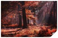 Fresh Autumn Woodlands, Print