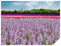 The Confetti Fields of England. , Print