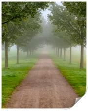Foggy Morning Country Tree Line Path, Print
