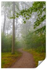 Foggy Morning Woodlands Walkway, Print