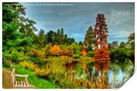 Autumn Colours Reflected in Pond, Print