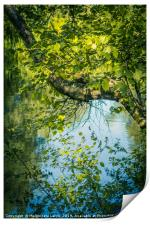 Beautiful tree branches over water, Monklands Cana, Print
