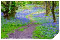 Beautiful bluebells in the forest of Scotland, Print