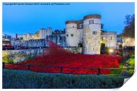 Poppy flowers at the Tower of London, Print