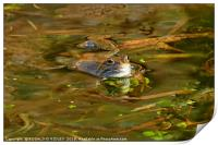 """""""Reflections of a Happy Frog"""", Print"""