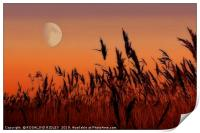 Moon over Reeds, Print
