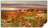 """""""Sunset over the poppies"""", Print"""
