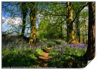"""Afternoon sunshine in the bluebell wood"", Print"