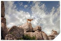 Wild mountain goats - Ibex in El Torcal,  Antequer, Print