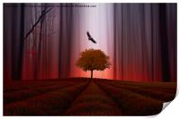 The Red forest, Print