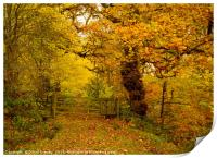 A walk in the autumnal woods, Print