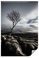 The Old Tree, Print