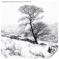 Bronte tree in the snow, Print