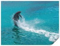 Dolphin spinning, Print