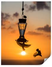 Sunset and birds on a feeder, Print