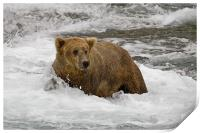 Grizzly, Print