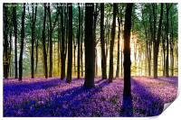 Bluebell Dawn - 5, Print