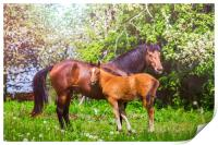 Mother horse with little foal, Print