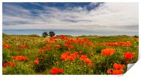 Poppies of Bamburgh, Print