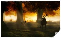 Forest deer and mist, Print
