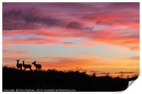 Red deer at sunset - silhouette , Print