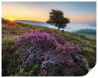 Purple Heather Sunrise, Derbyshire, Print