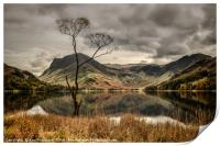 The Lone Tree at Buttermere, Print