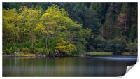 Reflections of Autumn trees in Loch Chon, Print