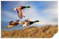 DUCKS ON THE OGMORE RIVER, Print
