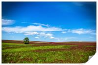 Lonely tree in red clover field. Blue sky. Summer , Print