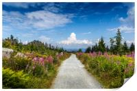 Meadow filled with wildflowers in the Bavarian For, Print