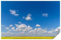 Yellow Rapeseed Flowers Field With Blue Sky, Print