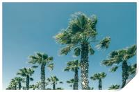 Green Palm Trees On Clear Blue Sky, Print