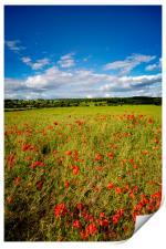 Richmond Poppies, Print
