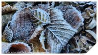 Early morning frost, Print