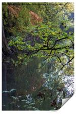 reflection on pond in autumn, Print