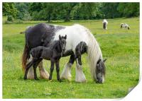 Mother with Foal, Print
