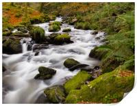 The River at Dolgoch Falls in the Autumn., Print