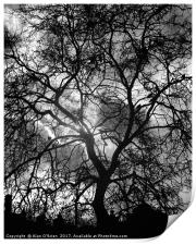 Tree silhouette with dramatic sky backdrop., Print