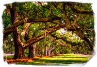 LIne of Oaks Art, Print