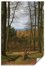 View from the Clent Hills, Print