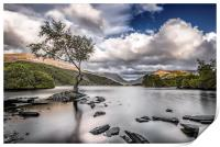 The Lone Tree - Llyn Padarn, Print